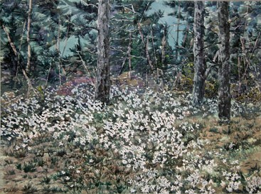 Woodland Daisies, Watercolor by Doug DeWolfe of New View
